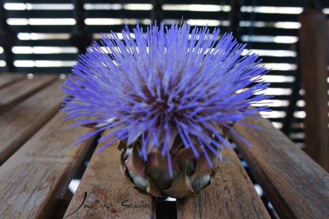 Alcachofa en flor